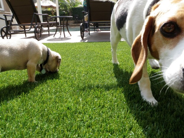 Synthetic Pet Turf Company Inland Empire, Artificial Pet Grass Backyard Installation