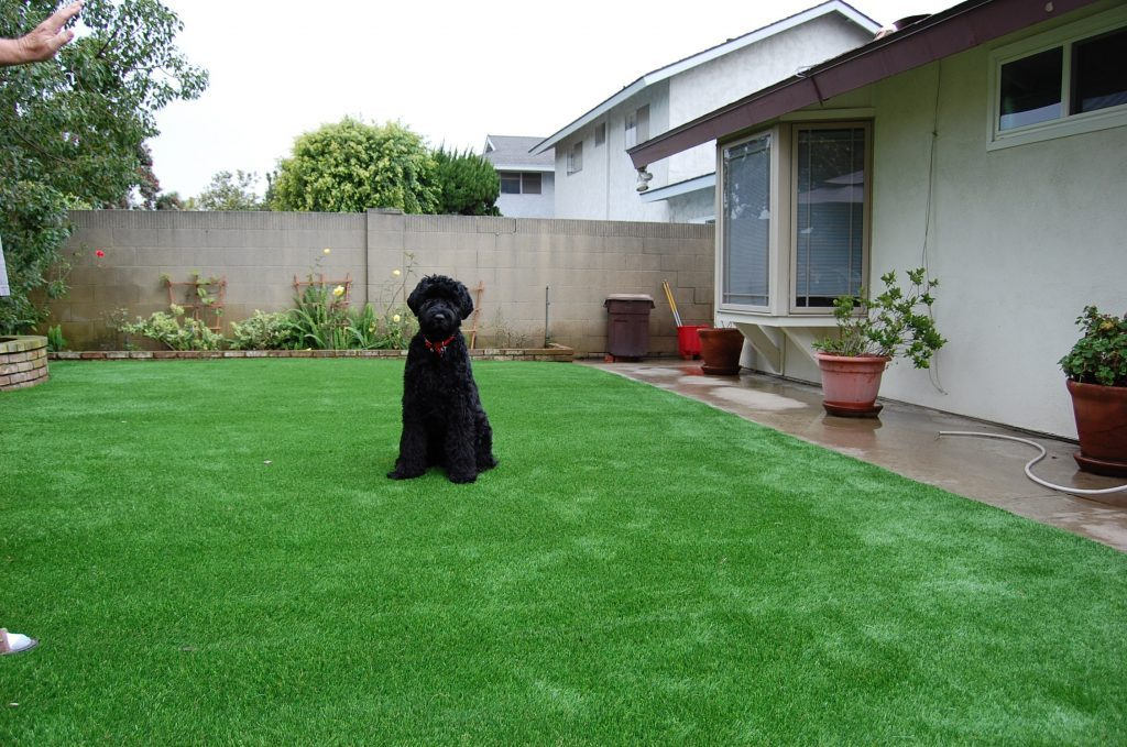 Synthetic Lawn Pet Turf Inland Empire, Top Rated Artificial Grass Installation for Dogs