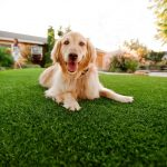 Synthetic Grass For Dogs Inland Empire, Artificial Lawn Dog Run Installation