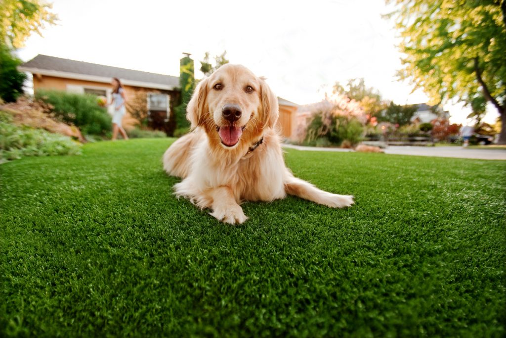 Synthetic Grass For Dogs Inland Empire,